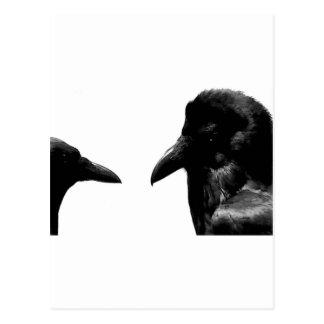 Crow and Raven Postcard
