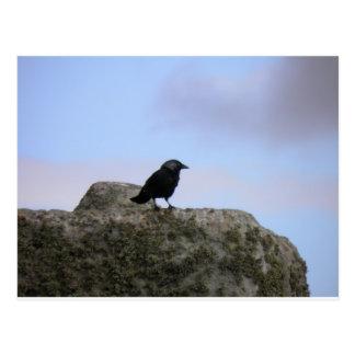 Crow guardian of Stone Henge Postcard