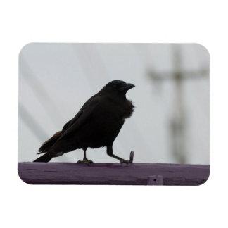 Crow on Purple Magnet
