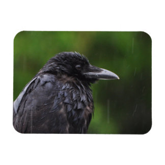 Crow or Raven in the Rain Magnet