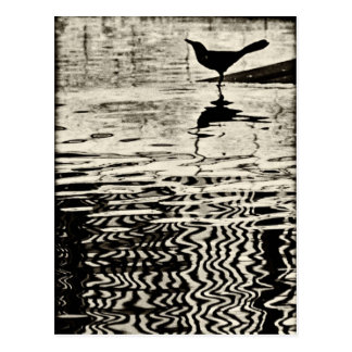 Crow with Reflection on Water – Postcard