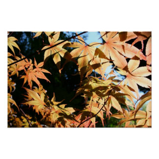 Crown - Maples - Floral Photography Poster