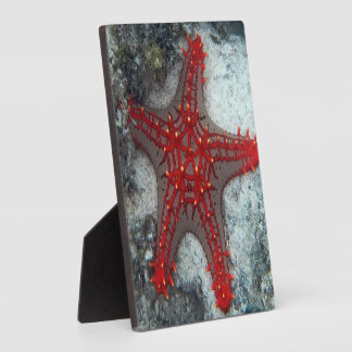 Crown Of Thorns Starfish On The Coral Reef Plaque