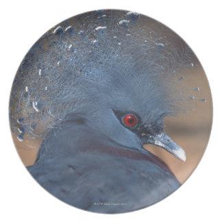 crowned pigeon dinner plate