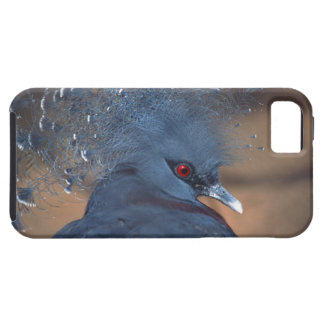crowned pigeon iPhone 5 case