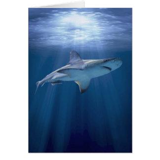 Cruising Shark Card