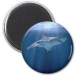 Cruising Shark Refrigerator Magnet