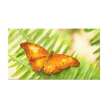 crusier butterfly canvas prints