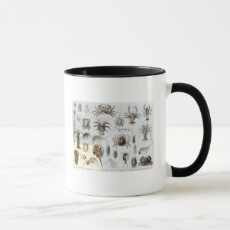 Crustacea and Arachnida Mug