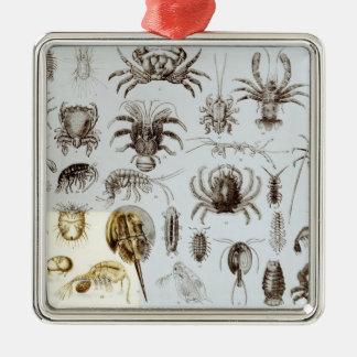 Crustacea and Arachnida Silver-Colored Square Decoration