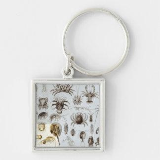 Crustacea and Arachnida Silver-Colored Square Key Ring