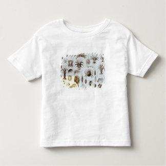 Crustacea and Arachnida Toddler T-Shirt