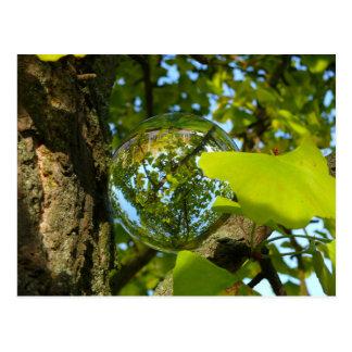 Crystal Ball in Gingko tree Postcard