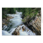 Crystal River, Gunnison National Forest, Greeting Card