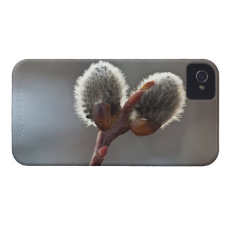 CTW Catkin Twins iPhone 4 Covers