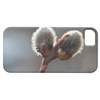 CTW Catkin Twins iPhone 5 Case