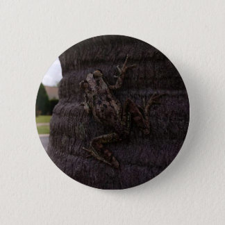 Cuban tree frog on a tree 6 cm round badge