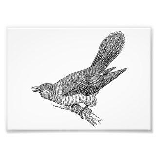 Cuckoo Bird Art Photo