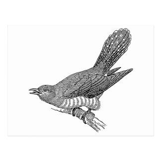 Cuckoo Bird Art Postcard