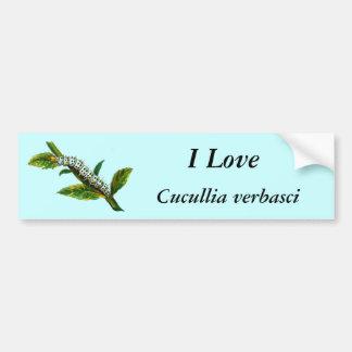 Cucullia verbasci caterpillar bumper sticker