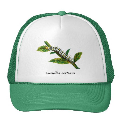 Cucullia verbasci caterpillar trucker hats