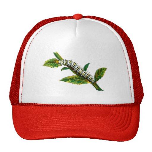 Cucullia verbasci caterpillar mesh hat
