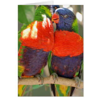 Cuddling Lorikeets Greeting Cards