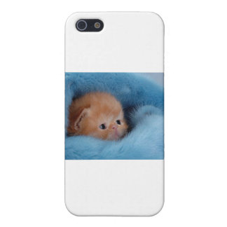 Cuddly citten cover for iPhone 5