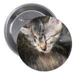 Cuddly Kitten Pinback Button