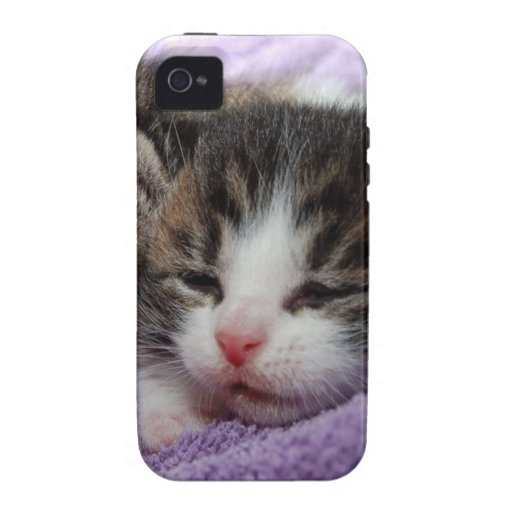 Cuddly Kittens Vibe iPhone 4 Cover