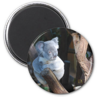 Cuddly Koala 6 Cm Round Magnet