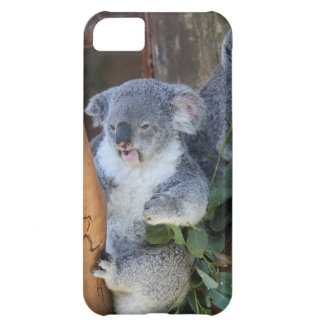 Cuddly Koala Bear iPhone Case iPhone 5C Covers