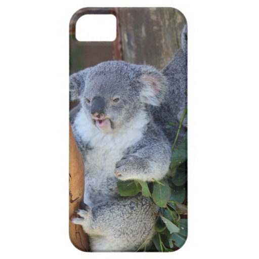 Cuddly Koala Bear iPhone Case iPhone 5 Cover