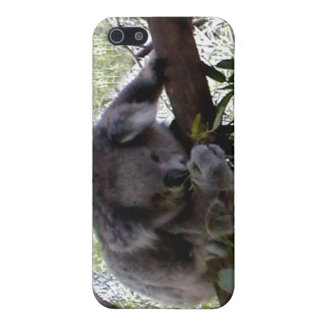 Cuddly Koala Cases For iPhone 5