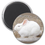 Cuddly White Bunny Magnet