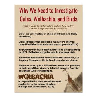 Culex, Wolbachia, and Birds by RoseWrites 21.5 Cm X 28 Cm Flyer