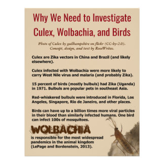 Culex, Wolbachia, and Birds by RoseWrites Flyer