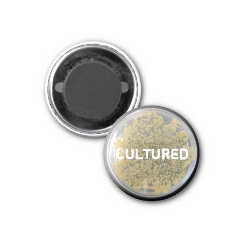 """Cultured"" Bacteria Culture Plate Magnet Fridge Magnet"