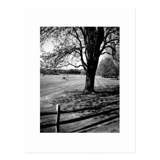 Culver Tree Postcard