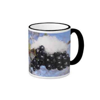 Cup black bird berries with snow