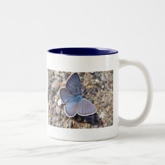 Cup blue butterfly Two-Tone mug
