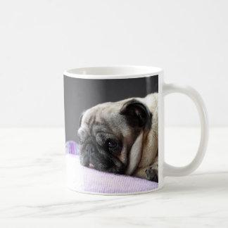 CUP of Pug pug Carlin - photo: Jean Louis Glineur