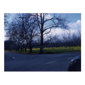 Cupertino Orchard 1960 Postcard