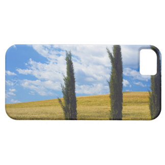 (cupressus sempervirens)  - Europe, Italy, 2 Barely There iPhone 5 Case
