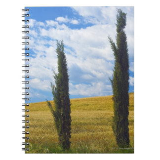 (cupressus sempervirens)  - Europe, Italy, 2 Notebooks