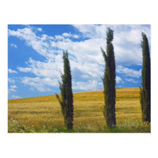 (cupressus sempervirens)  - Europe, Italy, 2 Postcard