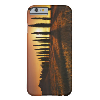 (cupressus sempervirens) - Europe, Italy, Barely There iPhone 6 Case