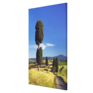 (cupressus sempervirens)  - Europe, Italy, Canvas Print