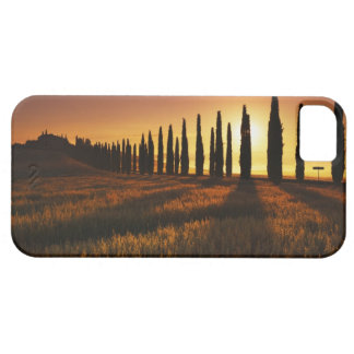 (cupressus sempervirens) - Europe, Italy, Case For The iPhone 5