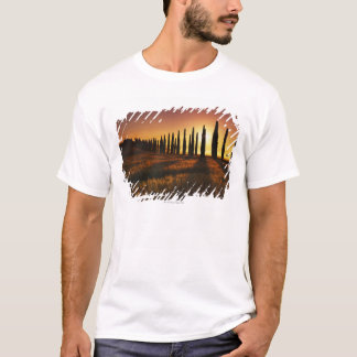 (cupressus sempervirens) - Europe, Italy, T-Shirt